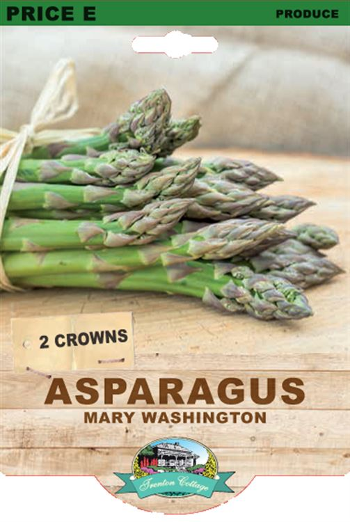 Picture of ASPARAGUS - MARY WASHINGTON
