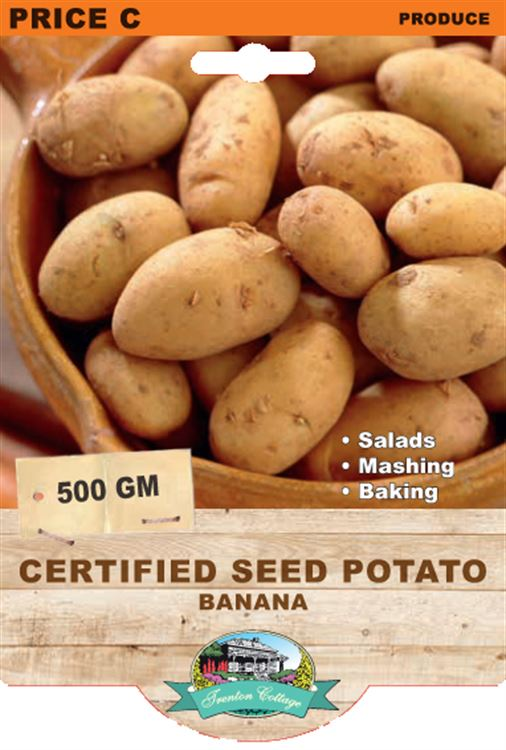 Picture of CERTIFIED SEED POTATO - BANANA