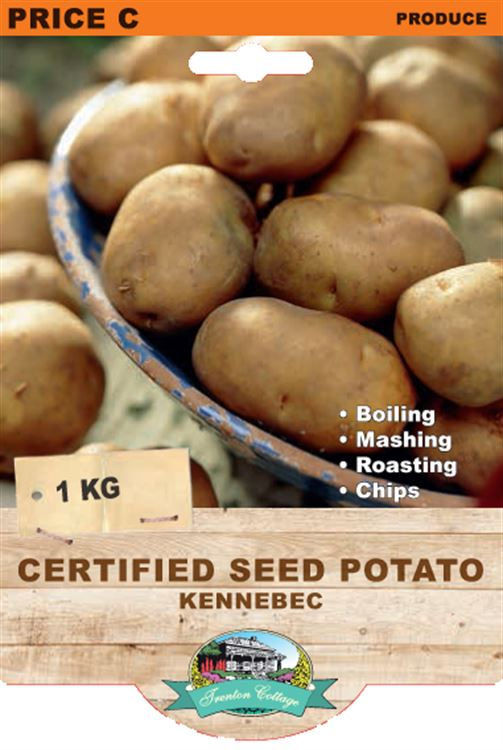 Picture of CERTIFIED SEED POTATO - KENNEBEC