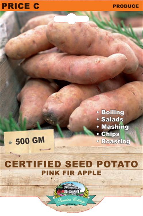 Picture of CERTIFIED SEED POTATO - PINK FIR APPLE