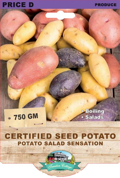 Picture of CERTIFIED SEED POTATO - POTATO SALAD SENSATION