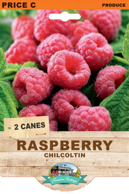 Picture of RASPBERRY - CHILCOLTIN
